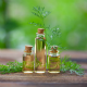 7 Best Reasons To Use Dill Essential Oil
