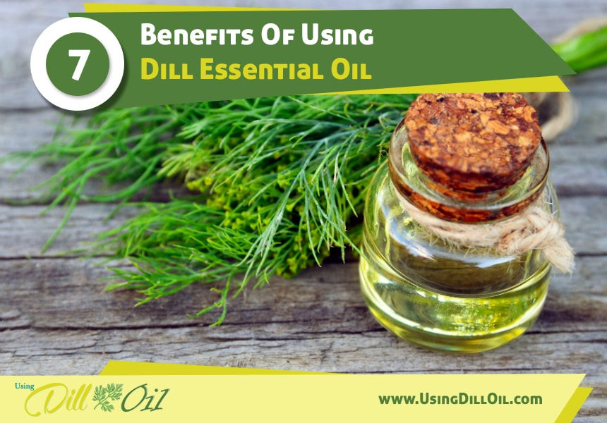 dill oil for spasms